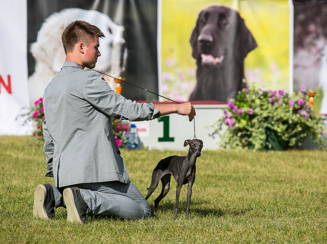 Italian Greyhounds kennel Flora Style | Nikoletta Divina Is Noveles