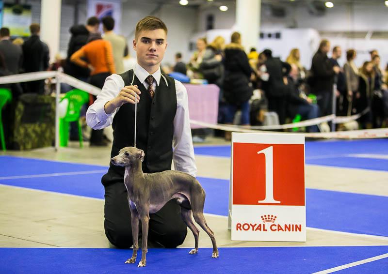Italian Greyhounds kennel Flora Style | Fabio Valentina Premium