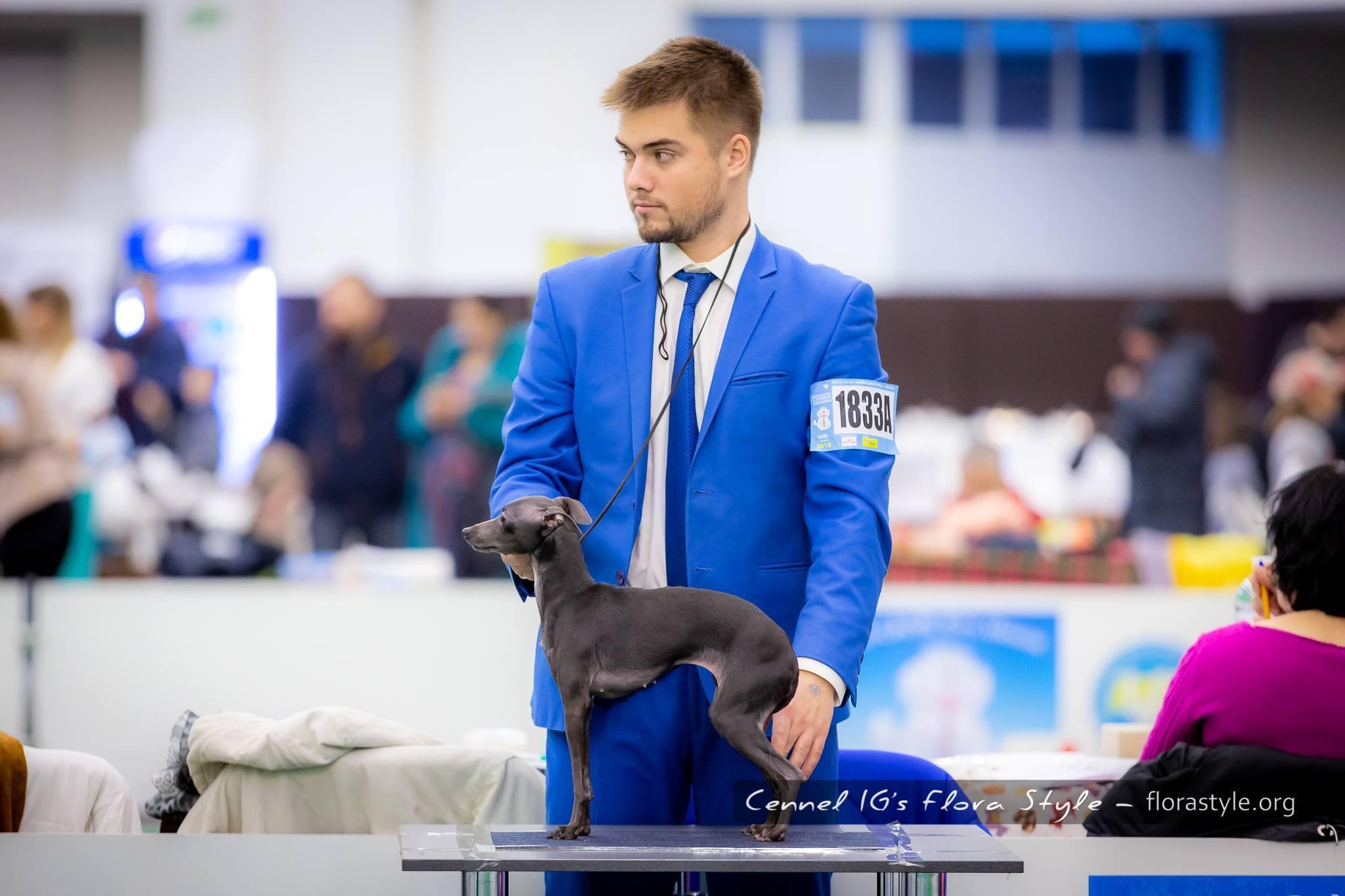 Italian greyhound kennel Flora Style | Daenerys Flora Style