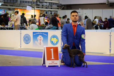 Italian Greyhounds kennel Flora Style on most prestigious dog shows in Ukraine!