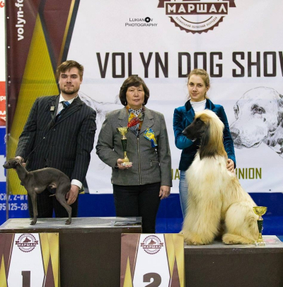 Italian Greyhound Castor Flora Style (JUNIOR EUROPEAN VICE WINER-2017! ) - Junior Grand Champion of Ukraine!