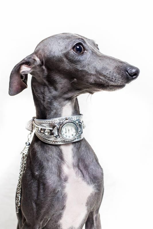 Italian greyhound kennel Flora Style | Tiffany Flora Style
