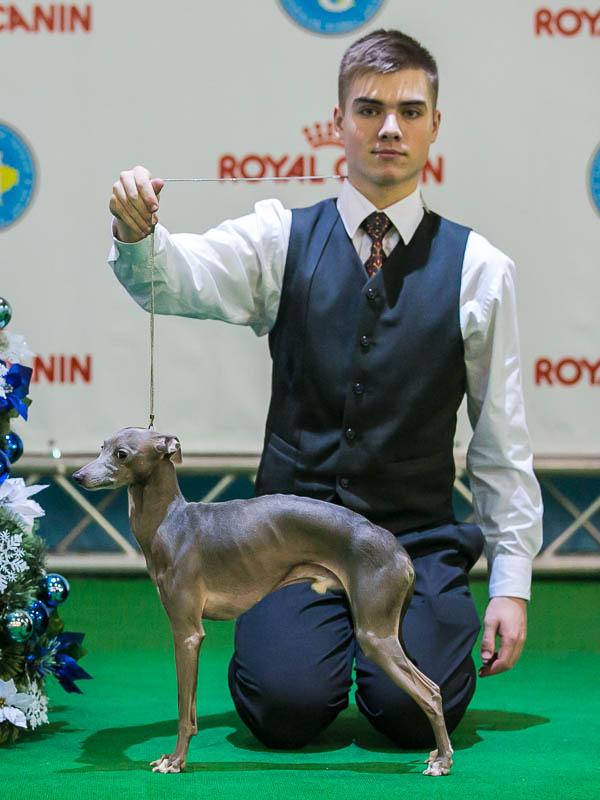 Italian Greyhound Kennel Flora Style | Fabio Valentyna Premium