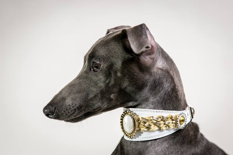 Italian greyhound kennel Flora Style | Ami Portos Flora Style