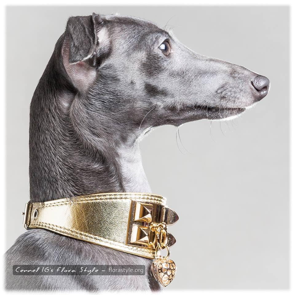 Italian greyhound kennel Flora Style | Dervisch Olympia Flora Style