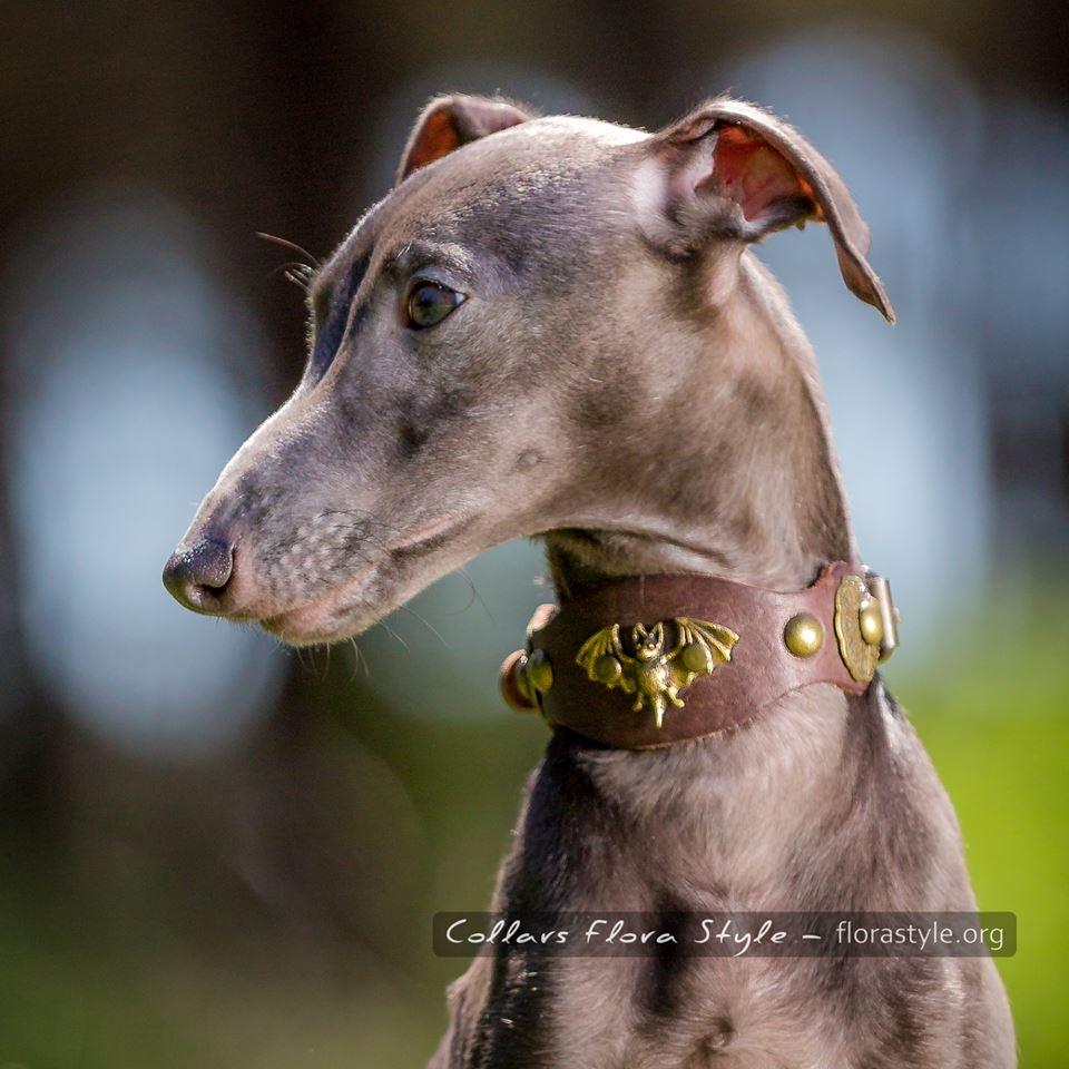 Щенки левретки в питомнике Flora Style | Italian Greyhound puppies Kennel Flora Style | Indigo Flora Style