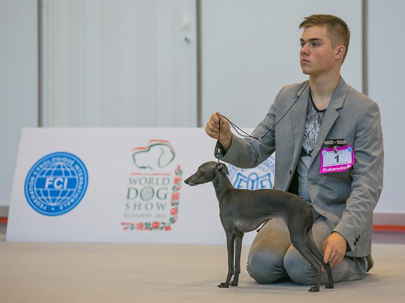 Italian greyhound kennel Flora Style | Nikoletta Divina Is Noveles