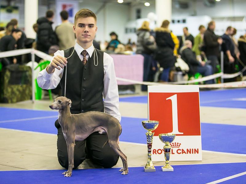 Italian greyhound kennel Flora Style | Fabio Valentina Premium